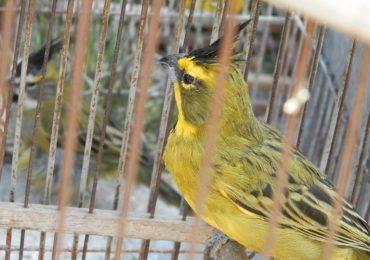 Ambiente rescató más de 50 aves del tráfico ilegal