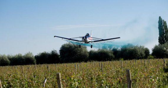 Fumigacion Aérea - Lobesia Botrana