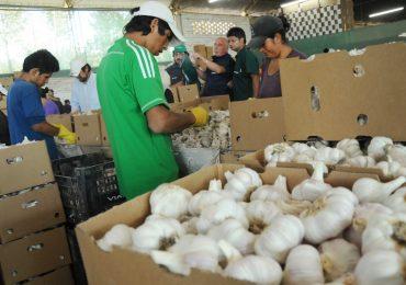 Maniobra china afecta exportaciones de ajo