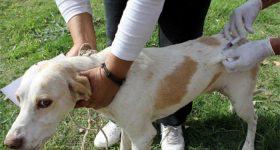 Vacunación Antirrábica en Tupungato