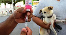 Programa de Vacunación antirrábica en Tupungato.