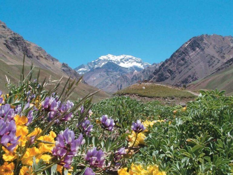primavera en Mendoza