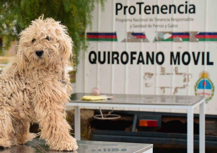 Prog. Esterelización y Castración Mascotas Tgto2