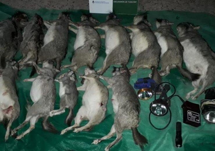 Viajaban con trece animales muertos y fueron detenidos en San Carlos